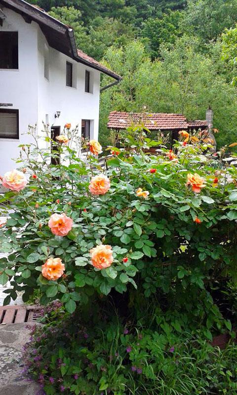 Къща за гости Планинска среща - снимка 9